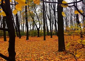 Осень. Летний сад