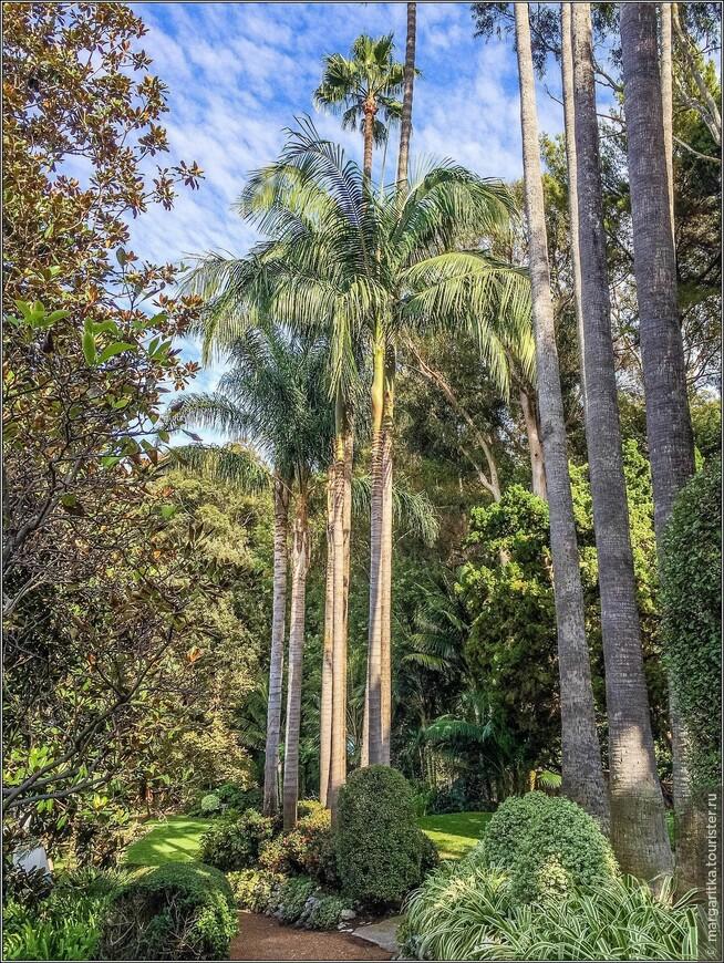богатейшая флора создана в парке при озере огромным количеством разных сортов пальм
