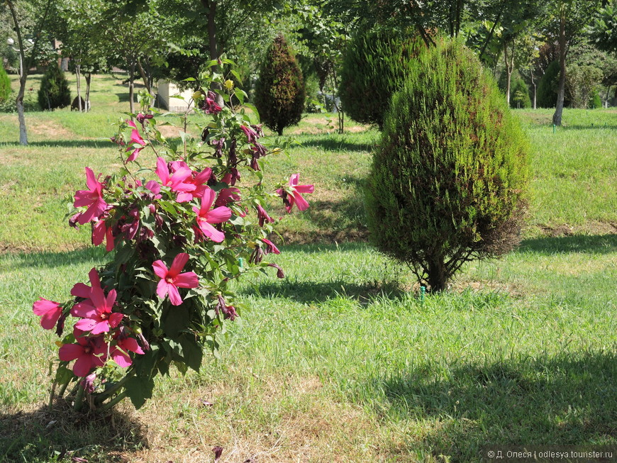 цветочное дерево неизвестное мне