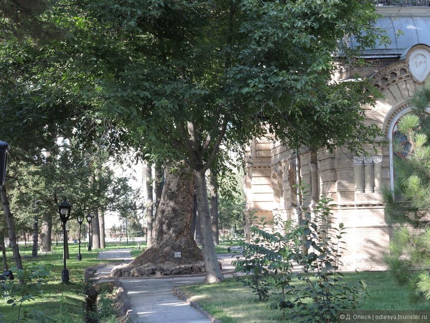толстущее дерево возле бывшей резиденции князя Романова