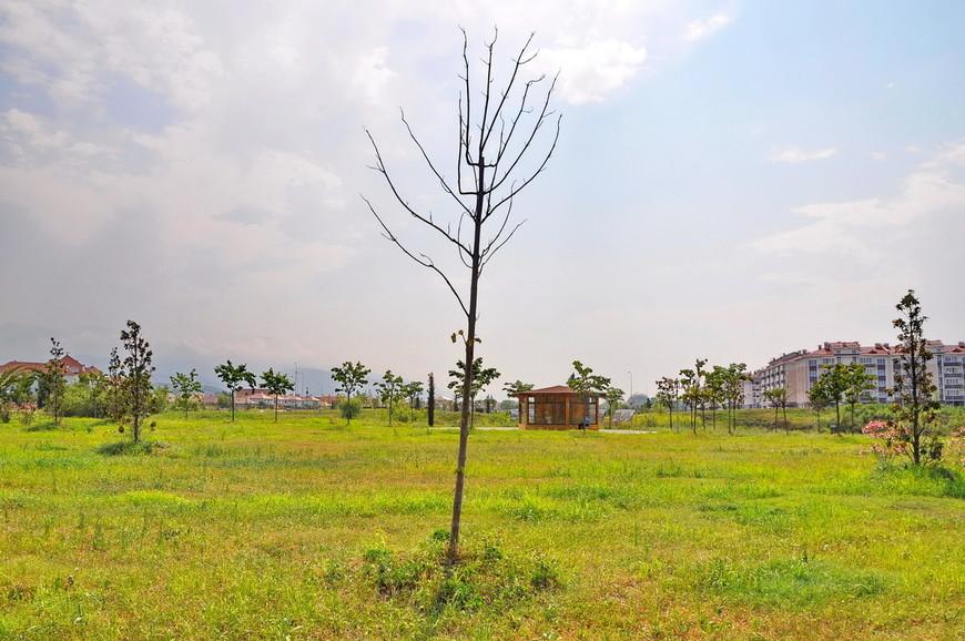 15. А это дерево не очень живо выглядит… Надеюсь, что это временно, на период лета.