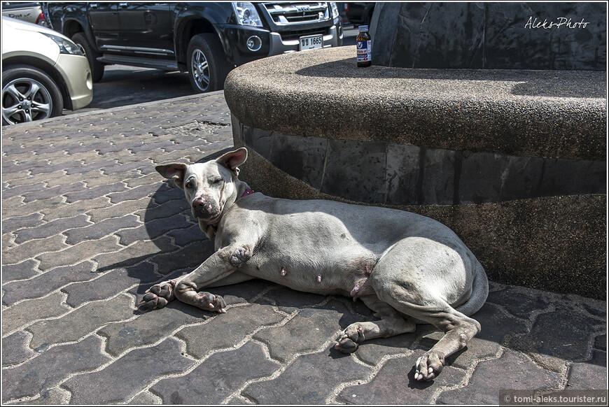 По пути часто попадаются лениво возлежащие собаки. Их в Таиланде везде много, как коров в Индии. Я никогда не прохожу мимо животных, в какой стране мне не пришлось бы побывать. Четвероногие своим видом могут много рассказать о той стране, в которой они живут. Скажу так - в Таиланде к собакам относятся не как к святым, но их никто не обижает. И они спокойно возлежат порой посреди тротуаров.