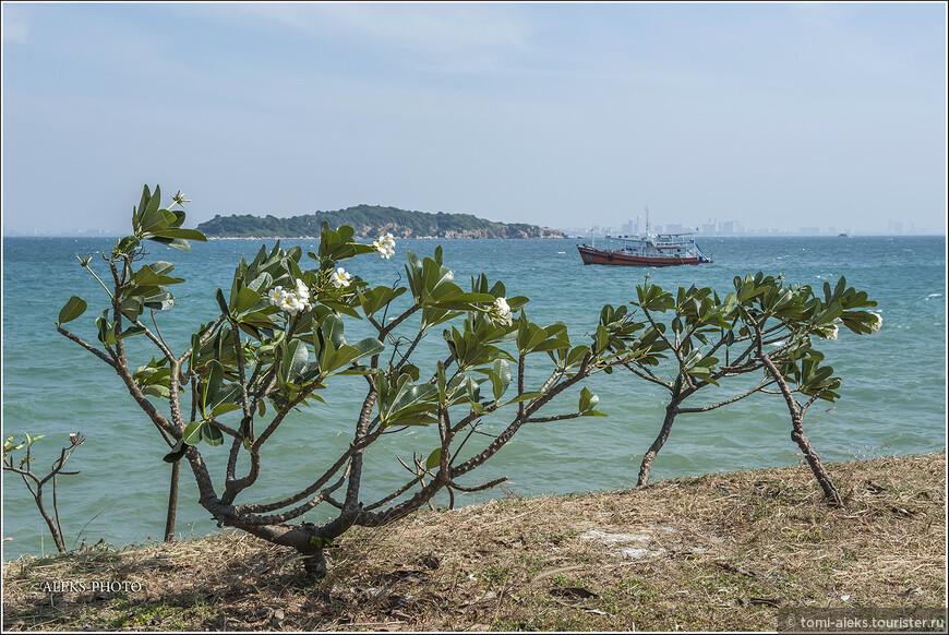 Поскольку цветов здесь всегда в изобилии, тайцы очень любят делать из них всякие гирлянды, подобно индийцам...