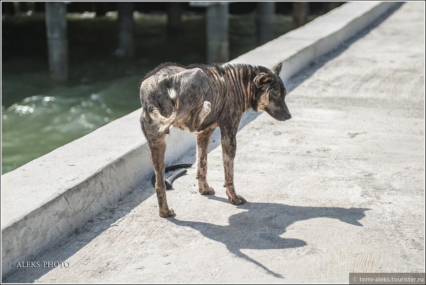А вот и плешивые собаки. Я сначала не понял — думал это единичный случай. Оказалось, что почти все собаки на этом острове страдают стригущим лишаем. Они часто бегают вот так на трех ногах, потому что четвертой все время чешут себе спину. Бедные животные. А тайцам, похоже, — все по боку. Плешивые — ну и ладно...
