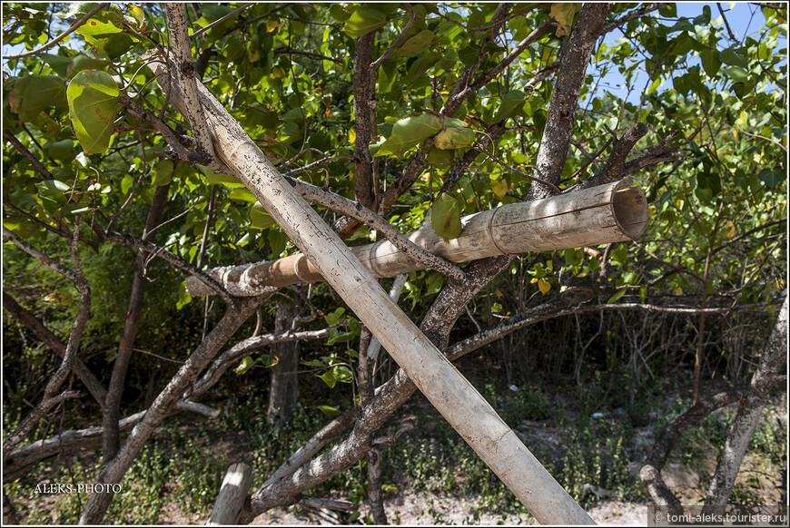 Бамбуковые стволы. Не даром их применяют вместо труб для водопровода. очень похожи на трубы...