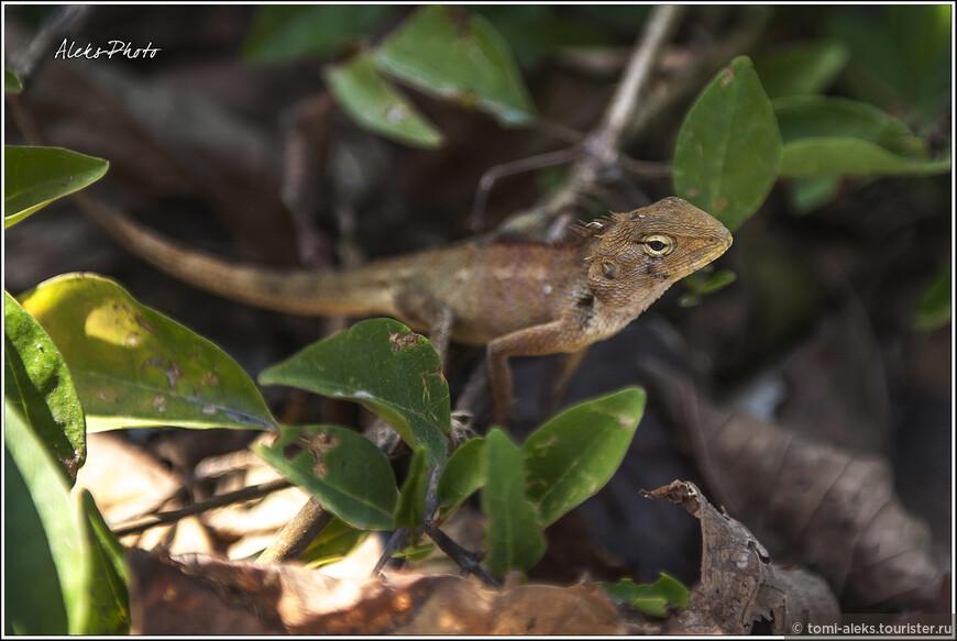 Из кустов выползает нечто, похожее на геккона. Увидев большой глаз моей камеры - быстро исчезает в зарослях.