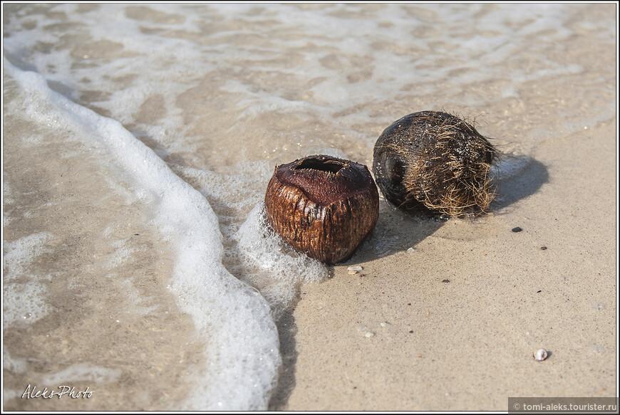 Дикий пляж украшают потемневшие от времени и соленой воды кокосы. В Сиамском заливе много таких плавает...