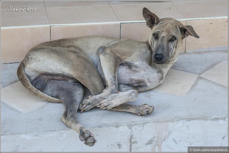 Поворачиваем назад в сторону деревушки. Всюду возле домов возлежат в блаженствующих позах псы. Это их любимое занятие. Что-то я не видел, чтобы они в Таиланде гавкали.