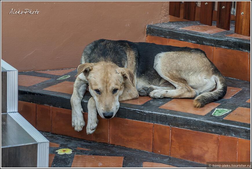 Видимо, охранять тут особо нечего. Лежи себе и отдыхай. Уже один вид собаки на пороге - отпугнет непрошеных гостей.