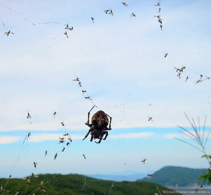 Из-за этого паука я сбилась с пути (хотя казалось, что это невозможно), и это стоило мне лишнего крутого подъема и не менее крутого спуска.