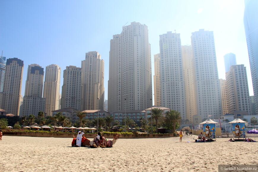 Очень дорогая недвижимость с видом на залив. На пляже нет ни зонтиков, ни лежаков. Это могут получить только постояльцы ближайших отелей. Нам же пришлось прятаться в тени переодевалок. Хорошо, хоть они есть. Душей нет. Зато можно покататься на верблюдах.