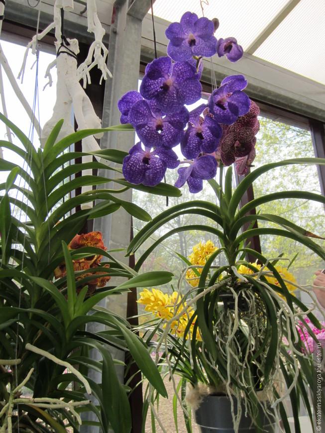 Орхидеи разнообразных расцветок.