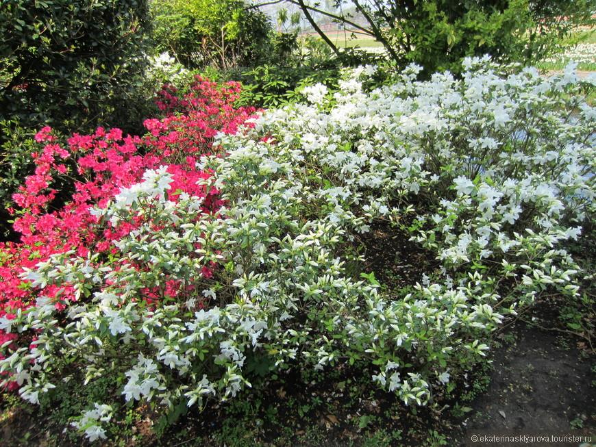 Кроме цветов на территории много цветущих кустарников.