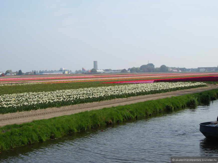 Целые поля цветов!