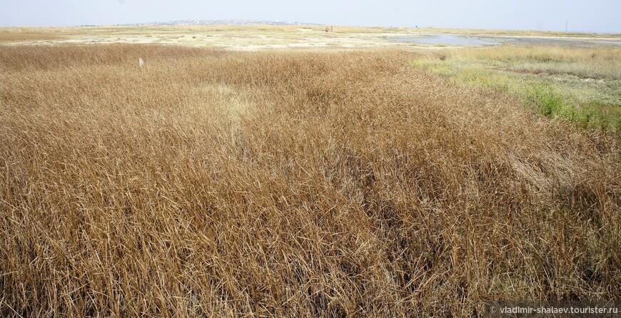 """На территории Тамани есть много грязевых вулканов. Они находятся  на небольших возвышенностях, где растительность представлена степными травами, которые к концу лета выгорают и имеют """"ржавый"""" вид."""
