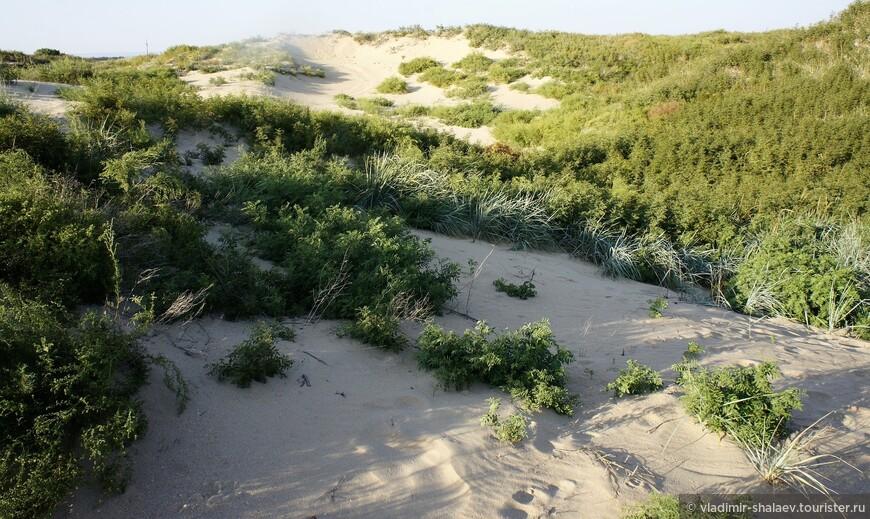 Песчаные дюны с низкорослой растительностью.