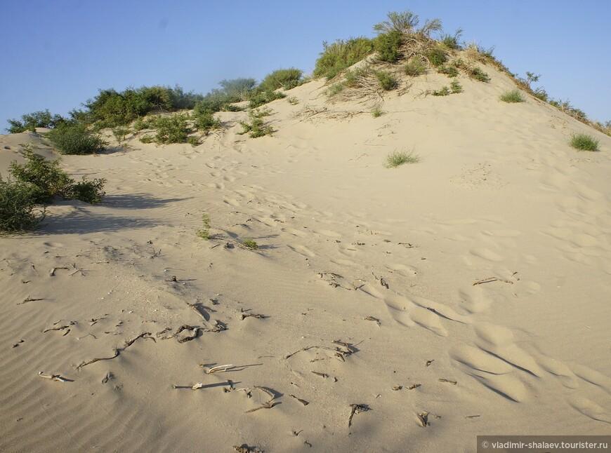 Высота дюн достигает 15 метров.