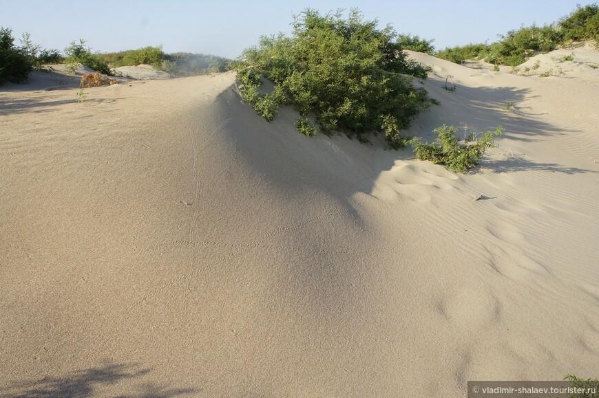 Ветер ежедневно меняет форму дюн.