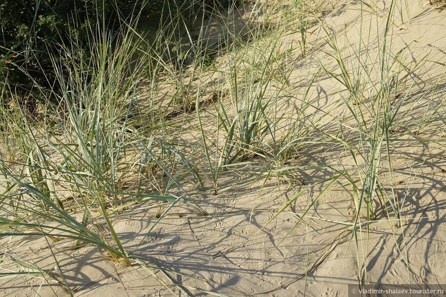 Встречается редкая степная растительность.