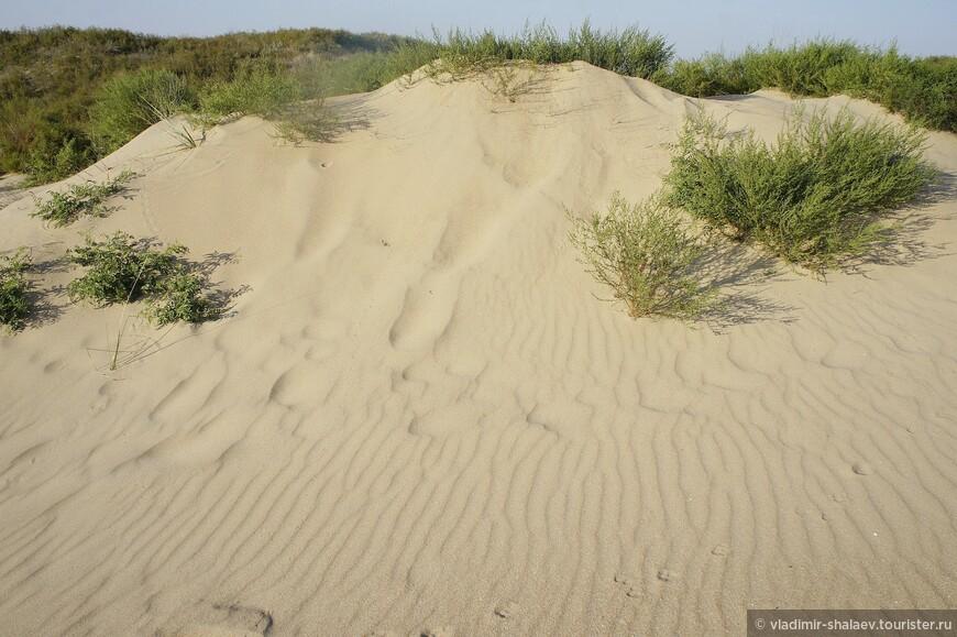 Ветер и редкие дожди создают различные рисунки на песке.