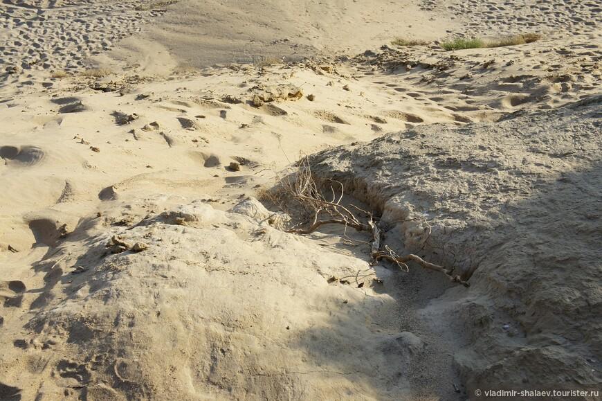 Песок, глина, грязевые отложения. Конечно же здесь ничего не вырастет.