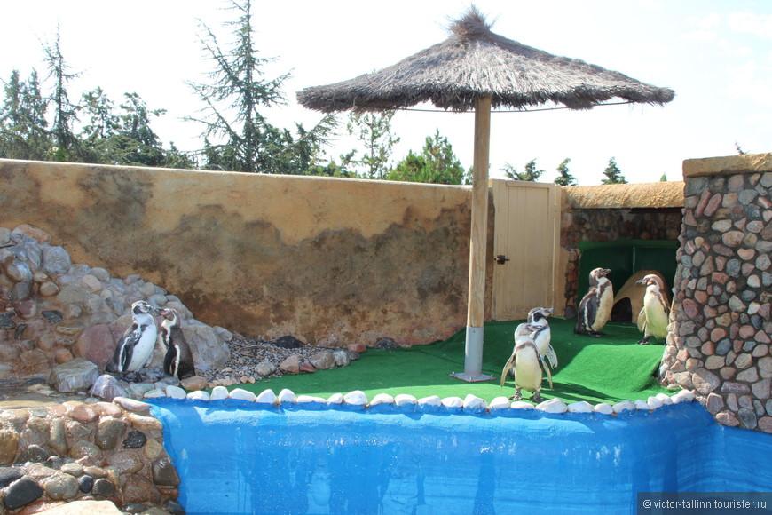 В мини зоопарке в основном собраны экзотические пернатые. Пингвины Гумбольта (родина Перу и Чили). Реактивны в воде и ужасно неуклюжие на суше.