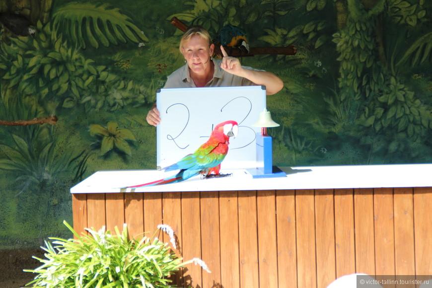 """Попугаи даже умеют """"считать"""" почти без ошибок."""