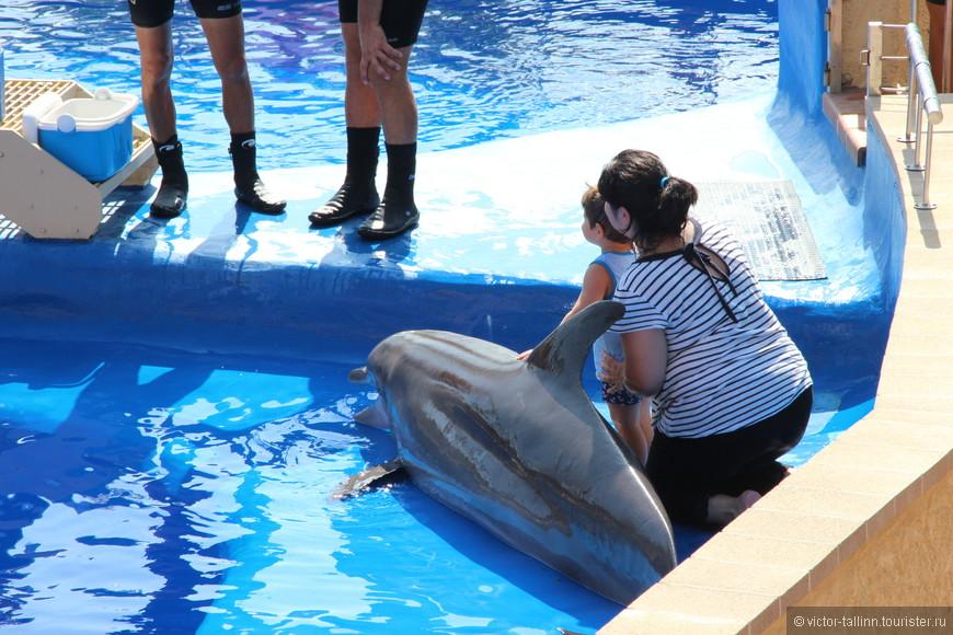 С дельфинами можно сфотографироваться, отстояв приличную очередь и заплатив 20 евро.