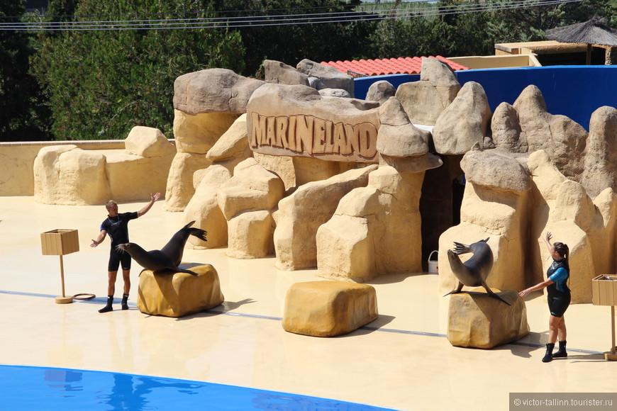 "На ""разогрев"" - шоу калифорнийских морских котиков."