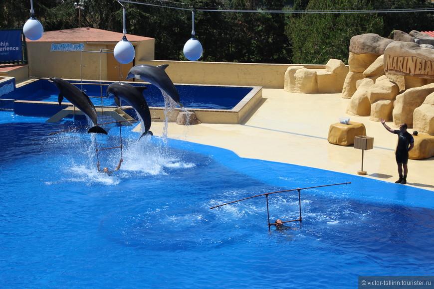 Шоу дельфинов проводятся два раза в день (в 12:30 и 17:00). Шоу морских львов также дважды и соответственно на полчаса раньше.