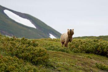 Как вести себя при встрече с медведем и волком