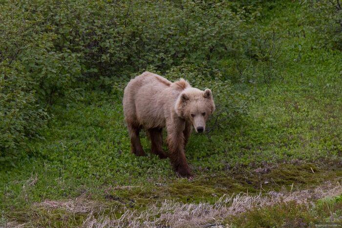 Правила поведения в лесу при встрече с медведем