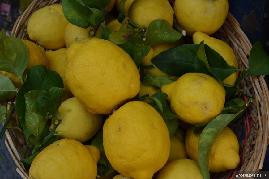 Гордость Чинкве терре - лимоны