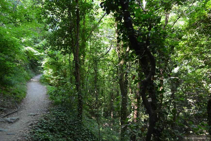 пешеходная тропа проходит через виноградники, лес, скалистые утесы