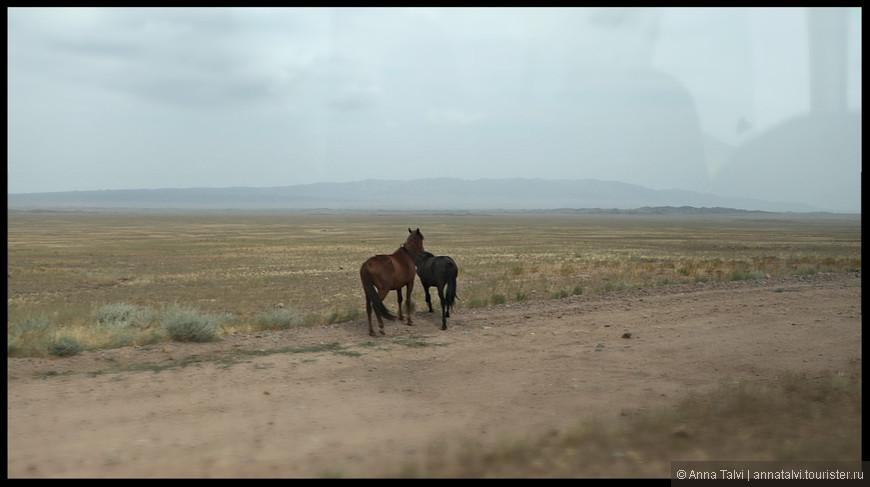 3атем около часа пути по степной дороге, где бродят лошади, овечки ...