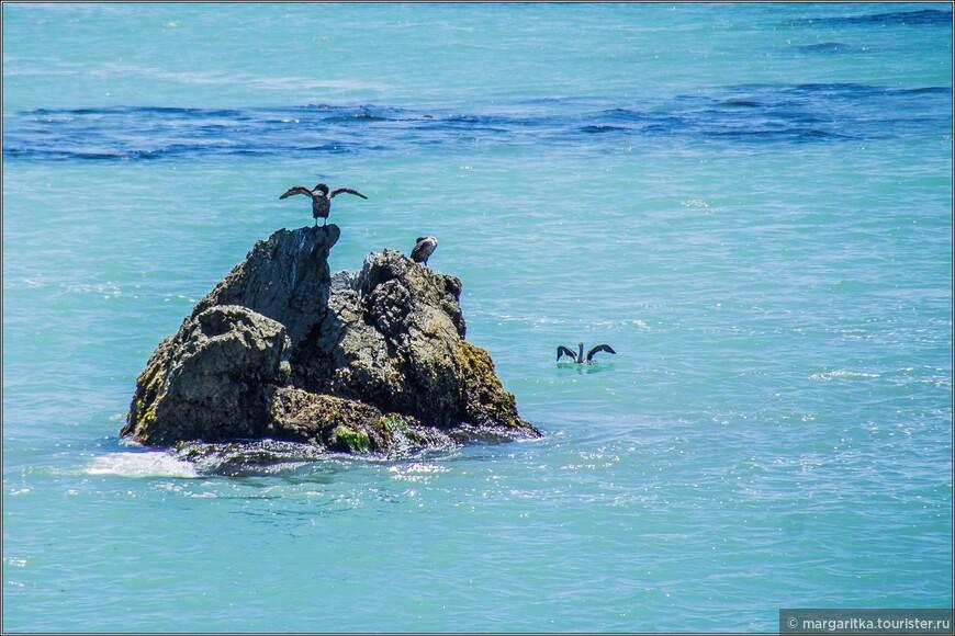 Фауна в заливе Сан Симеон