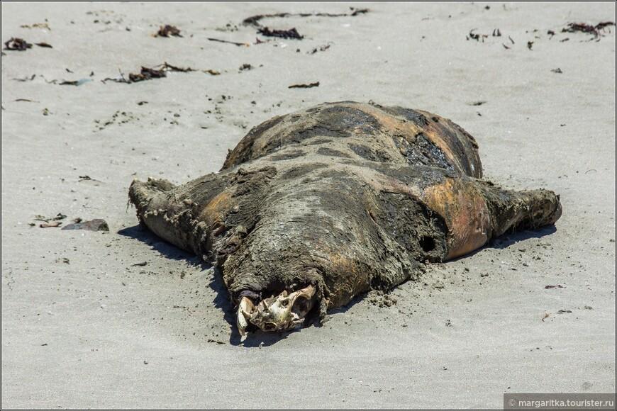 трупик тюленя... саоме ужастное. что никто и не собирался его убирать с этого многолюдного пляжа