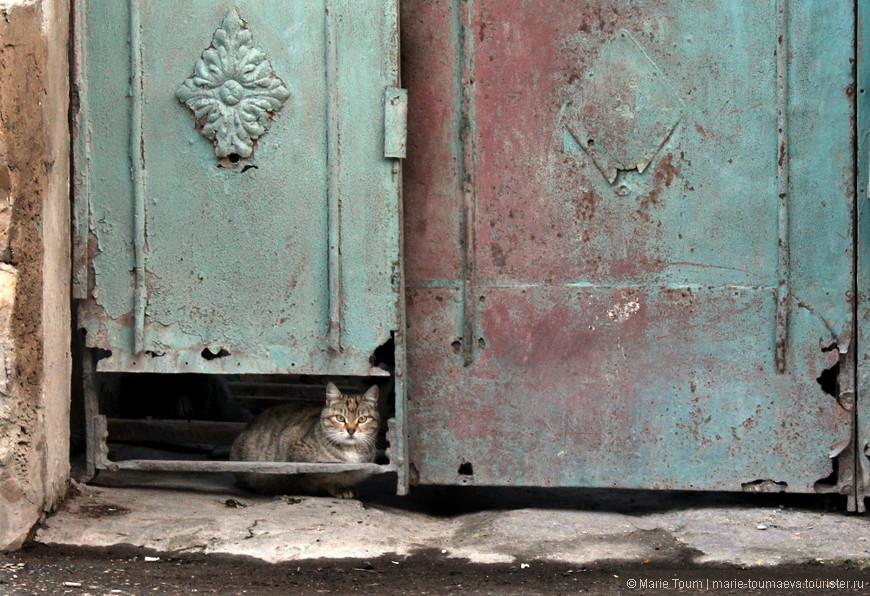 Весенняя кошка