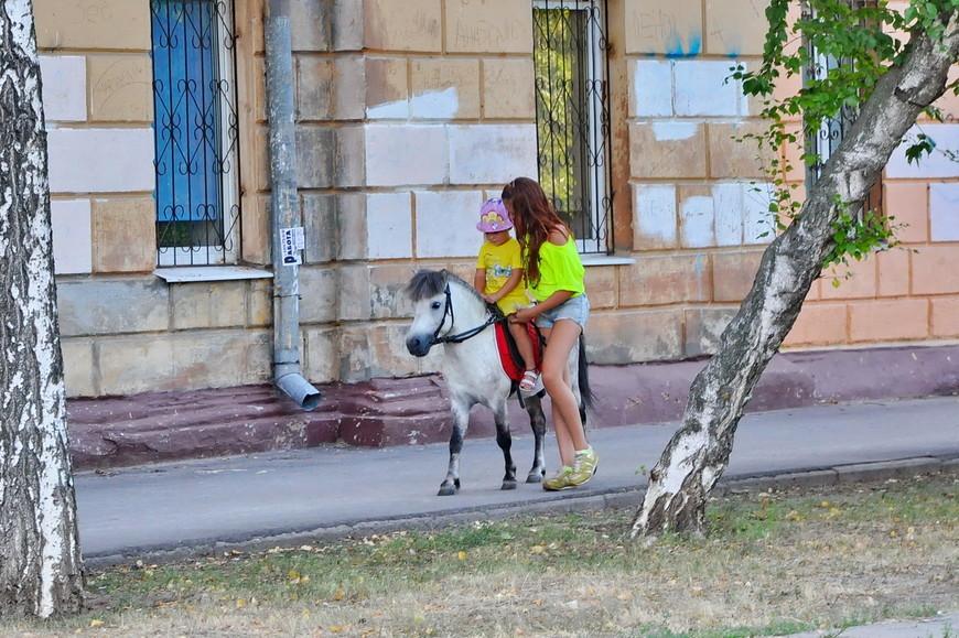 12. Вот для чего нужны эти мини-лошади.