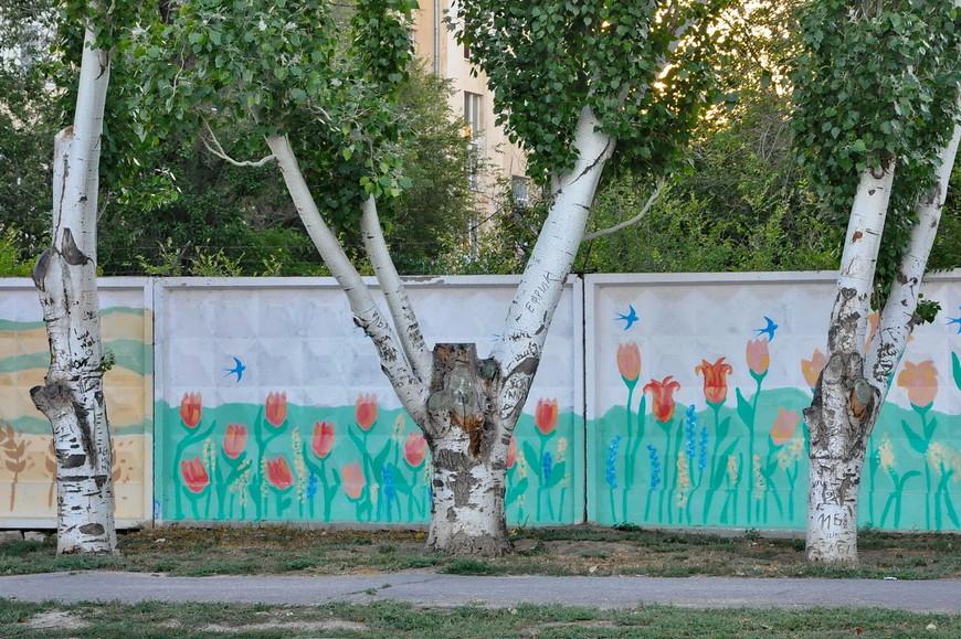29. Очень интересные деревья с тонкой корой на которой все пишут, что хотят, судя по всему.