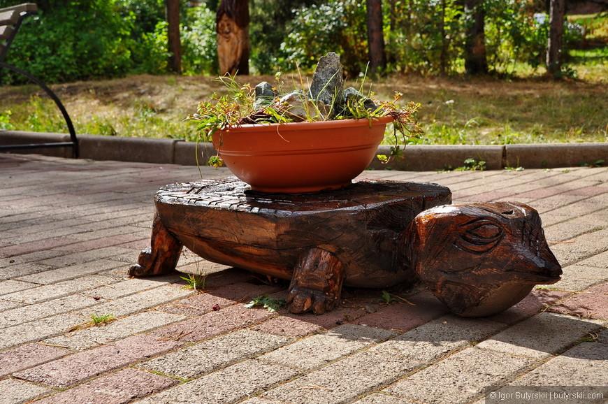 10. Такая красивая черепаха и безвкусный горшок на ней.