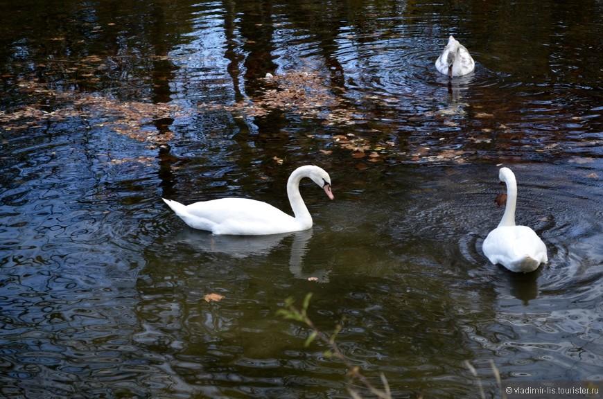 Лебеди, утки, цапли, чайки - вся пернатая живность отдыхает здесь)