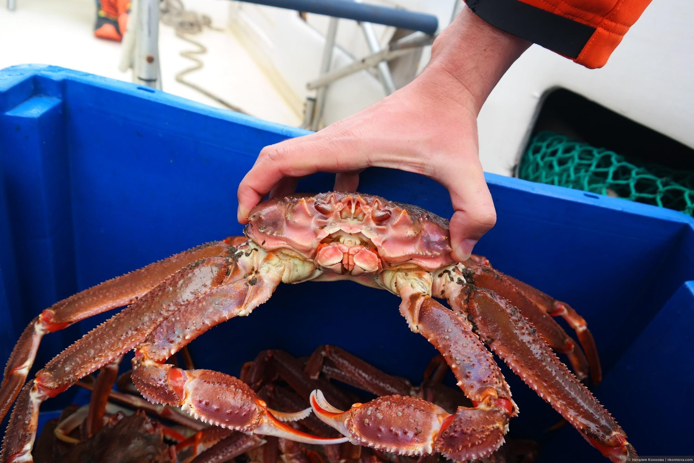 Браконьеры наловили в Черном море крабов на 24 млн грн, - Госпогранслужба - Цензор.НЕТ 5505