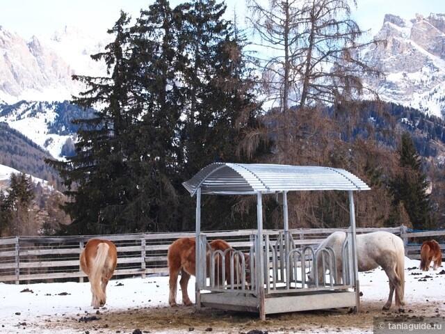 Пони ждут малышей для прогулки