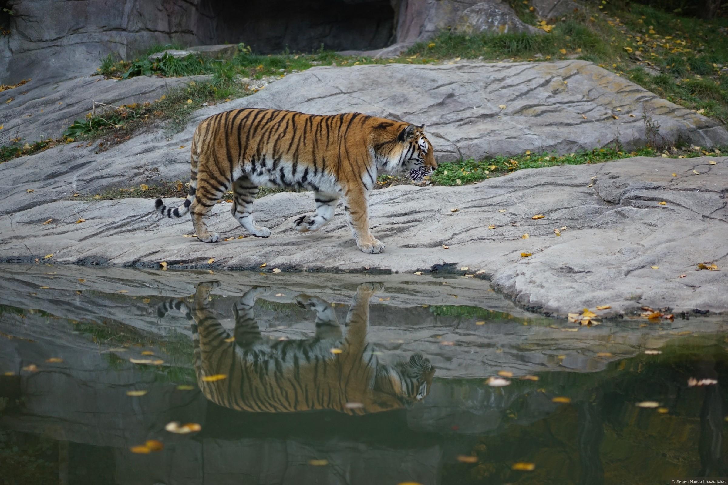 Зоопарк в Цюрихе на радость и взрослым и детям!