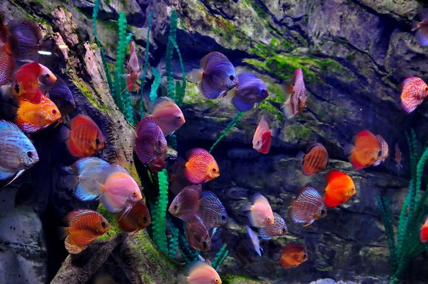 07. Также я ничего не понимаю в рыбках, даже пытаться определить их названия не буду.