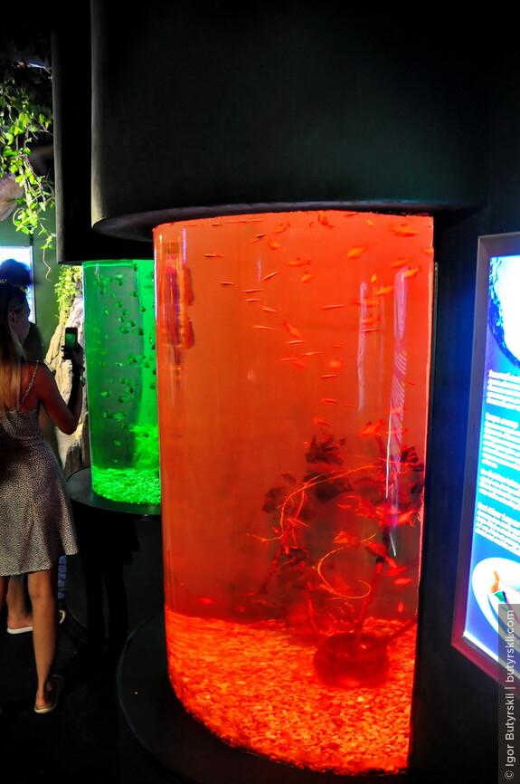 08. Поначалу предлагается прогуливаться в общем холле с такими аквариумами. Людей много, но все более-менее распределяются по помещению.