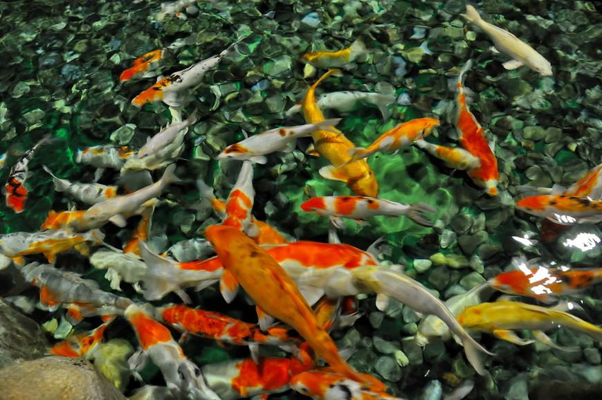 12. Чистая вода и невероятно быстрые рыбки, очень трудно поймать четкий снимок.