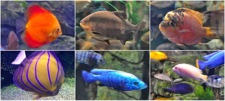 16. Множество ярких рыб, названий которых я не знаю.