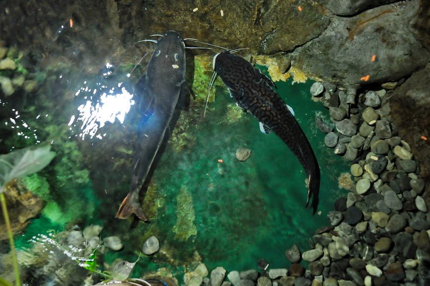 17. Можно посмотреть с мостика вниз на рыб, живут они явно неплохо.